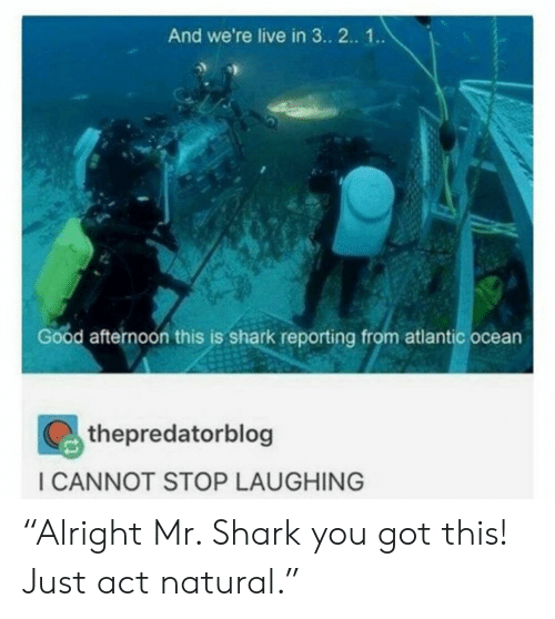 """Shark, Good, and Live: And we're live in 3. 2.. 1..  Good afternoon this is shark reporting from atlantic ocean  thepredatorblog  ICANNOT STOP LAUGHING """"Alright Mr. Shark you got this! Just act natural."""""""