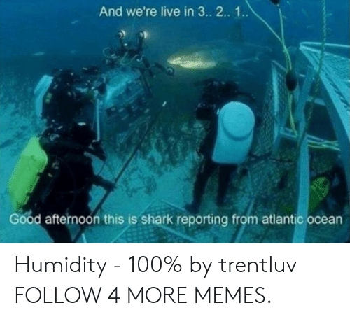 Dank, Memes, and Reddit: And we're live in 3.. 2.. 1.  Good afternoon this is shark reporting from atlantic ocean Humidity - 100% by trentluv FOLLOW 4 MORE MEMES.
