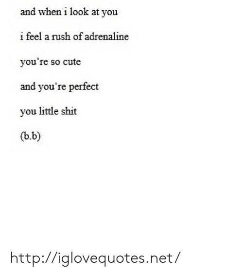 Cute, Shit, and Http: and when i look at you  i feel a rush of adrenaline  you're so cute  and you're perfect  you little shit  (b.b) http://iglovequotes.net/