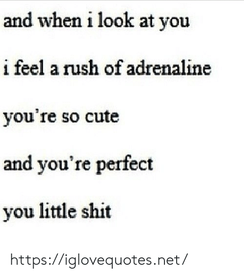 so cute: and when i look at you  i feel a rush of adrenaline  you're so cute  and you're perfect  you little shit https://iglovequotes.net/