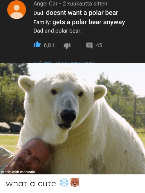 Bear: Angel Car • 2 kuukautta sitten  Dad: doesnt want a polar bear  Family: gets a polar bear anyway  Dad and polar bear:  E 45  6,8 t.  made with mematic what a cute ❄️🐻