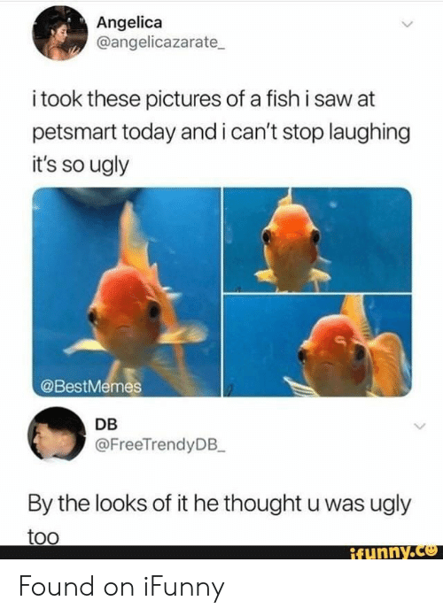 Saw, Ugly, and Fish: Angelica  @angelicazarate  i took these pictures of a fish i saw at  petsmart today and i can't stop laughing  it's so ugly  @BestMemes  DB  @FreeTrendyDB_  By the looks of it he thought u was ugly  too  ifynny.co Found on iFunny