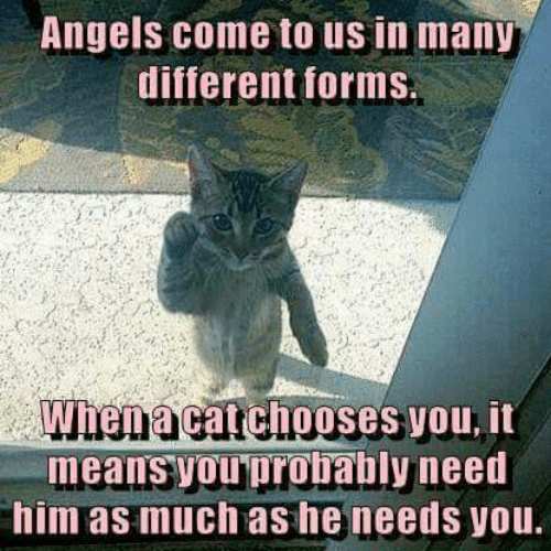 Memes, Angels, and 🤖: Angels come to us in many  different forms  When a catchooses you, it  means you probably need  him as much as he needs you.