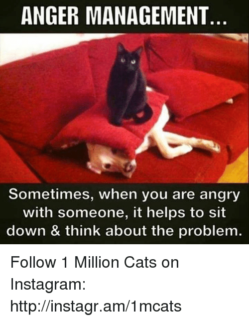 Anger Management: ANGER MANAGEMENT  Sometimes, when you are angry  with someone, it helps to sit  down & think about the problem. Follow 1 Million Cats on Instagram: http://instagr.am/1mcats