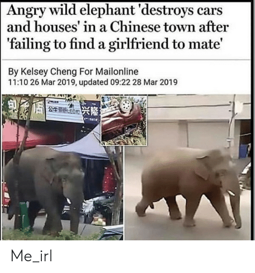 Elephant: Angry wild elephant 'destroys cars  and houses' in a Chinese town after  'failing to find a girlfriend to mate'  By Kelsey Cheng For Mailonline  11:10 26 Mar 2019, updated 09:22 28 Mar 2019  249 ED Me_irl