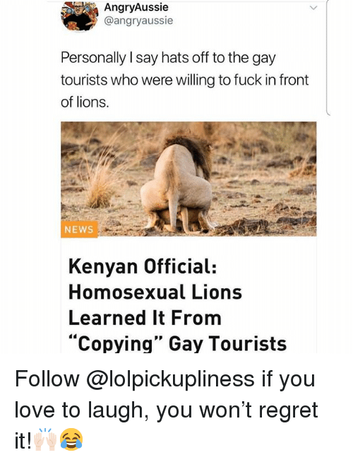 "Love, Memes, and News: AngryAussie  @angryaussie  Personally I say hats off to the gay  tourists who were willing to fuck in front  of lions.  NEWS  Kenyan Official:  Homosexual Lions  Learned It From  ""Copying"" Gay Tourists Follow @lolpickupliness if you love to laugh, you won't regret it!🙌🏻😂"