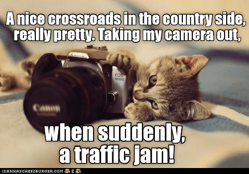 Traffic, Camera, and Com: Anice crossroads in the country side,  really pretty. Taking my camera out  EOS  when suddenly,  a traffic jam!  ICANHASCHEEZERGER coM