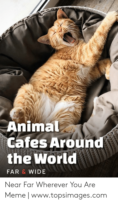 Topsimages: Animal  Cafes Around  the World  FAR & WIDE Near Far Wherever You Are Meme | www.topsimages.com