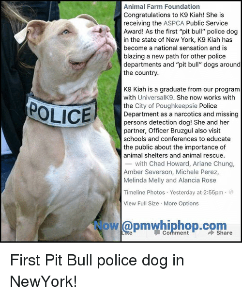 "Aspca: Animal Farm Foundation  Congratulations to K9 Kiah! She is  receiving the ASPCA Public Service  Award! As the first ""pit bull"" police dog  in the state of New York, K9 Kiah has  become a national sensation and is  blazing a new path for other police  departments and ""pit bull"" dogs around  the country.  K9 Kiah is a graduate from our program  with UniversalK9. She now works with  the City of Poughkeepsie Police  Department as a narcotics and missing  persons detection dog! She and her  partner, Officer Bruzgul also visit  schools and conferences to educate  the public about the importance of  animal shelters and animal rescue.  -with Chad Howard, Ariane Chung,  Amber Severson, Michele Perez,  Melinda Melly and Alancia Rose  POLICE  Timeline Photos Yesterday at 2:55pm.e  View Full Size More Options  owl@pmwhiphop.com  Comment First Pit Bull police dog in NewYork!"