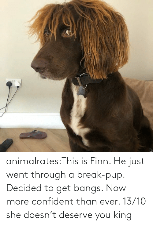 ever: animalrates:This is Finn. He just went through a break-pup. Decided to get bangs. Now more confident than ever. 13/10 she doesn't deserve you king