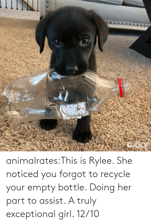 class: animalrates:This is Rylee. She noticed you forgot to recycle your empty bottle. Doing her part to assist. A truly exceptional girl. 12/10