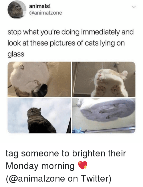 Animals, Cats, and Memes: animals!  @animalzone  stop what you're doing immediately and  look at these pictures of cats lying on  glass tag someone to brighten their Monday morning 💖 (@animalzone on Twitter)