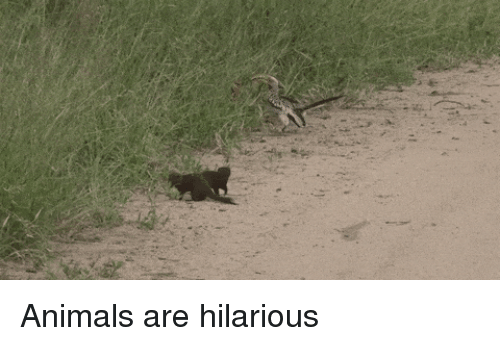Animals, Funny, and Hilarious: Animals are hilarious