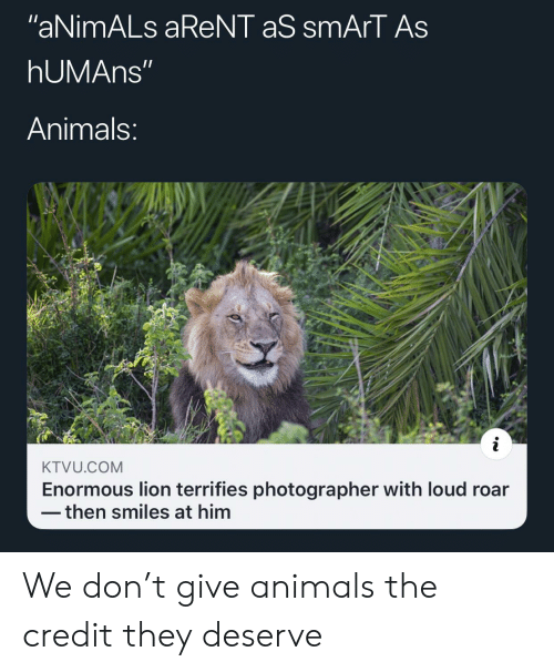 """Lion: """"aNimALs aReNT aS smArT As  hUMAns""""  Animals:  KTVU.COM  Enormous lion terrifies photographer with loud roar  then smiles at him We don't give animals the credit they deserve"""