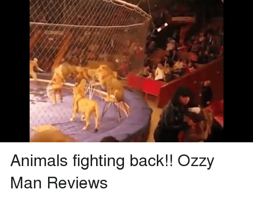 Funny, Ozzy, and Review: Animals fighting back!!  Ozzy Man Reviews
