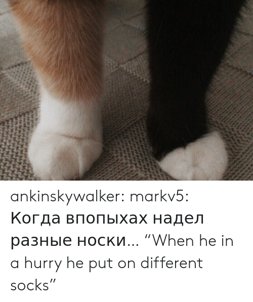 "hurry: ankinskywalker:  markv5:  Когда впопыхах надел разные носки…  ""When he in a hurry he put on different socks"""