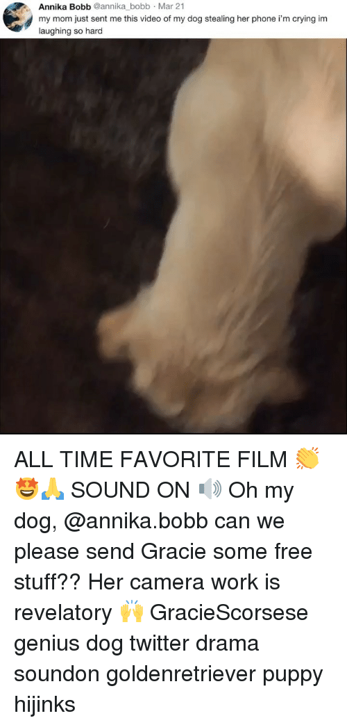 Crying, Memes, and Phone: Annika Bobb @annika bobb Mar 21  my mom just sent me this video of my dog stealing her phone i'm crying im  laughing so hard ALL TIME FAVORITE FILM 👏🤩🙏 SOUND ON 🔊 Oh my dog, @annika.bobb can we please send Gracie some free stuff?? Her camera work is revelatory 🙌 GracieScorsese genius dog twitter drama soundon goldenretriever puppy hijinks
