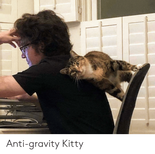 Gravity: Anti-gravity Kitty