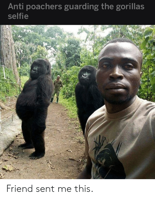 Selfie, Anti, and Friend: Anti poachers guarding the gorillas  selfie Friend sent me this.