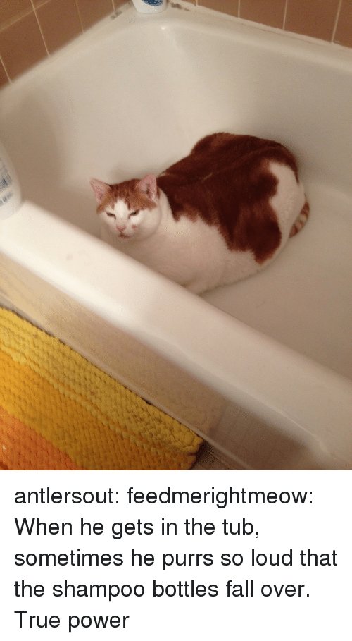 Fall, True, and Tumblr: antlersout:  feedmerightmeow:  When he gets in the tub, sometimes he purrs so loud that the shampoo bottles fall over.  True power
