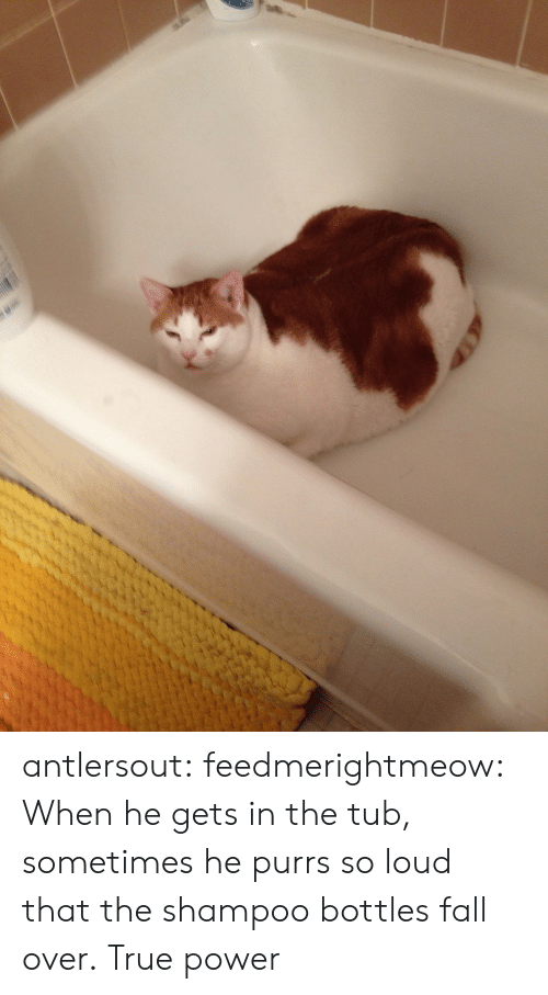 fall over: antlersout:  feedmerightmeow:  When he gets in the tub, sometimes he purrs so loud that the shampoo bottles fall over.   True power