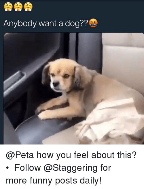 Funny, Peta, and Trendy: Anybody want a dog?? @Peta how you feel about this? • ➫➫➫ Follow @Staggering for more funny posts daily!