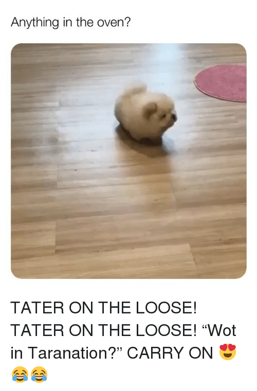 """Memes, 🤖, and Oven: Anything in the oven'? TATER ON THE LOOSE! TATER ON THE LOOSE! """"Wot in Taranation?"""" CARRY ON 😍😂😂"""