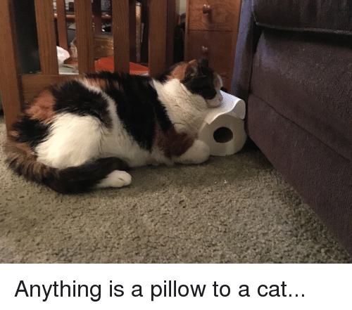 Bad, Comfortable, and House: Anything is a pillow to a cat...