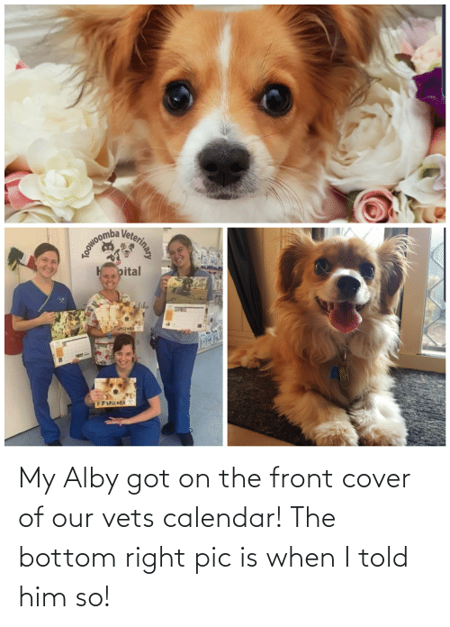 Front Cover: aoowoomb  pital  DILAT  Veterinay My Alby got on the front cover of our vets calendar! The bottom right pic is when I told him so!