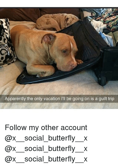 Apparently, Memes, and Butterfly: Apparently the only vacation I'll be going on is a guilt trip Follow my other account @x__social_butterfly__x @x__social_butterfly__x @x__social_butterfly__x