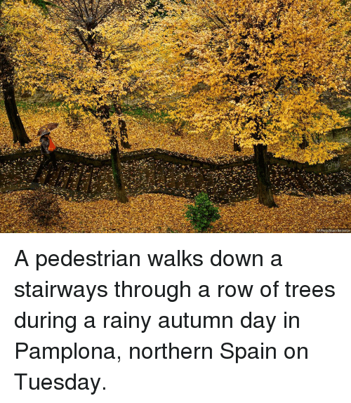 Memes, Spain, and Trees: APPhoto/ Alvaro Barrientos A pedestrian walks down a stairways through a row of trees during a rainy autumn day in Pamplona, northern Spain on Tuesday.