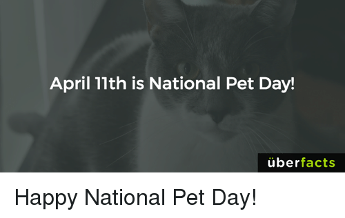 Facts, Memes, and Uber: April 11th is National Pet Day!  uber  facts Happy National Pet Day!