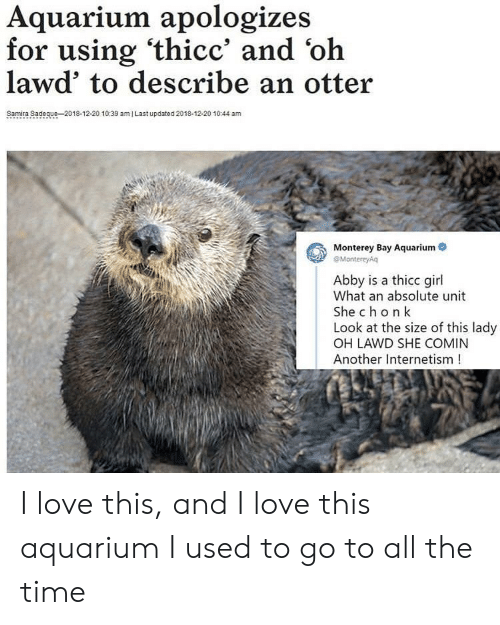 Love, Aquarium, and Girl: Aquarium apologizes  for using 'thicc' and 'oh  lawd' to describe an otter  Samira Sadeque-2018-12-20 10:39 amI Last updated 2018-12-20 1044 am  Monterey Bay Aquarium  eMontereyAq  Abby is a thicc girl  What an absolute unit  She chon k  Look at the size of this lady  OH LAWD SHE COMIN  Another Internetism! I love this, and I love this aquarium I used to go to all the time