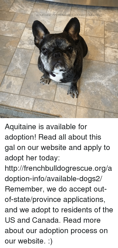 Memes, Canada, and 🤖: AQUITAIN  RENCHBULLDOGRESCUEORG Aquitaine is available for adoption! Read all about this gal on our website <location, likes, dislikes> and apply to adopt her today: http://frenchbulldogrescue.org/adoption-info/available-dogs2/  Remember, we do accept out-of-state/province applications, and we adopt to residents of the US and Canada. Read more about our adoption process on our website. :)