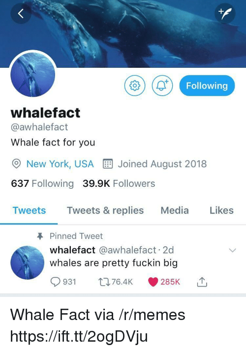 Memes, New York, and Media: (ar Following  whalefact  @awhalefact  Whale fact for you  New York, USAE Joined August 2018  637 Following 39.9K Followers  Tweets Tweets & replies Media Likes  Pinned Tweet  whalefact @awhalefact 2d  whales are pretty fuckin big  93 t76.4 285 Whale Fact via /r/memes https://ift.tt/2ogDVju