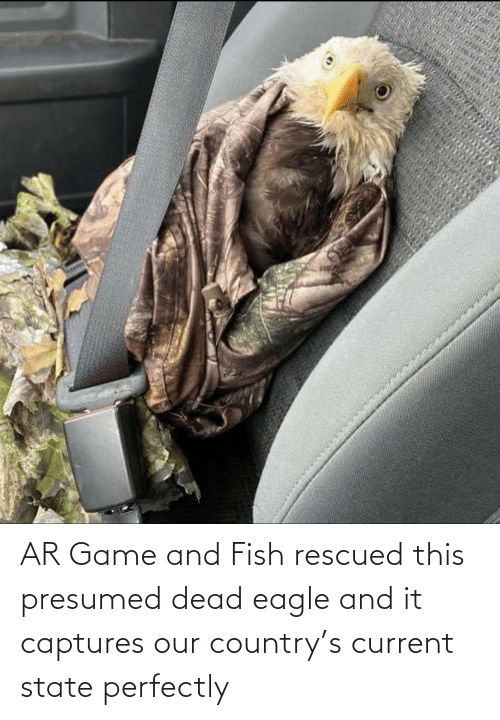 state: AR Game and Fish rescued this presumed dead eagle and it captures our country's current state perfectly