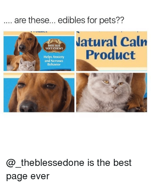 Memes, Anxiety, and Best: . are these... edibles for pets??  atural Caln  Product  BITE SIZE  SOFT CHEWS  Helps Anxiety  and Nervous  Behavior @_theblessedone is the best page ever