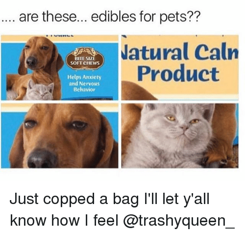 Copped: are these... edibles for pets??  atural Calrn  Product  BITE SIZE  SOFT CHEWS  Helps Anxiety  and Nervous  Behavior Just copped a bag I'll let y'all know how I feel @trashyqueen_