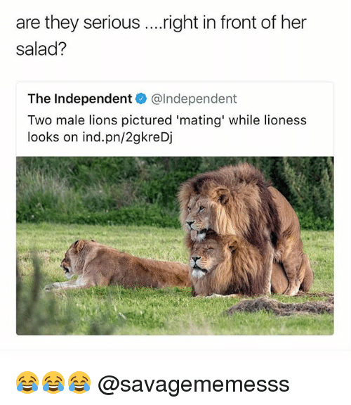 Fronting: are they serious ....right in front of her  salad?  The Independent@lndependent  Two male lions pictured 'mating' while lioness  looks on ind.pn/2gkreDj 😂😂😂 @savagememesss