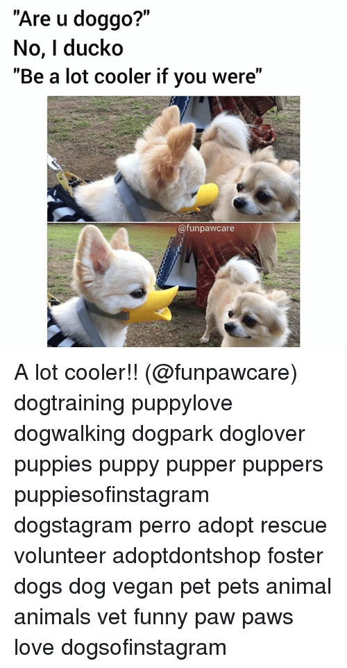 """Animals, Dogs, and Funny: """"Are u doggo?""""  No, I ducko  """"Be a lot cooler if you were""""  @funpawcare A lot cooler!! (@funpawcare) dogtraining puppylove dogwalking dogpark doglover puppies puppy pupper puppers puppiesofinstagram dogstagram perro adopt rescue volunteer adoptdontshop foster dogs dog vegan pet pets animal animals vet funny paw paws love dogsofinstagram"""