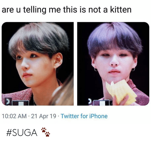 suga: are u telling me this is not a kitten  10:02 AM 21 Apr 19 Twitter for iPhone #SUGA 🐾