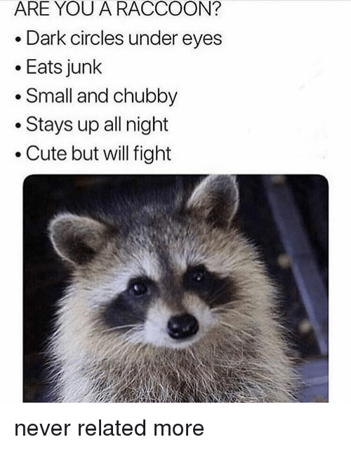 Cute, Memes, and Raccoon: ARE YOU A RACCOON?  Dark circles under eyes  Eats junk  * Small and chubby  Stays up all night  .Cute but will fight never related more