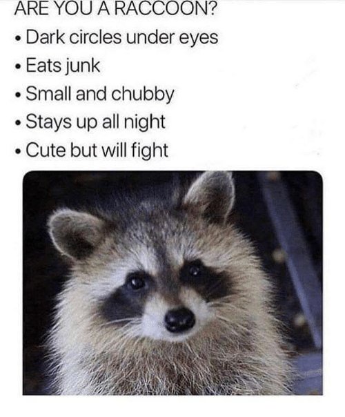 Cute, Raccoon, and Circles: ARE YOU A RACCOON?  Dark circles under eyes  .Eats junk  Small and chubby  .Stays up all night  .Cute but will fight