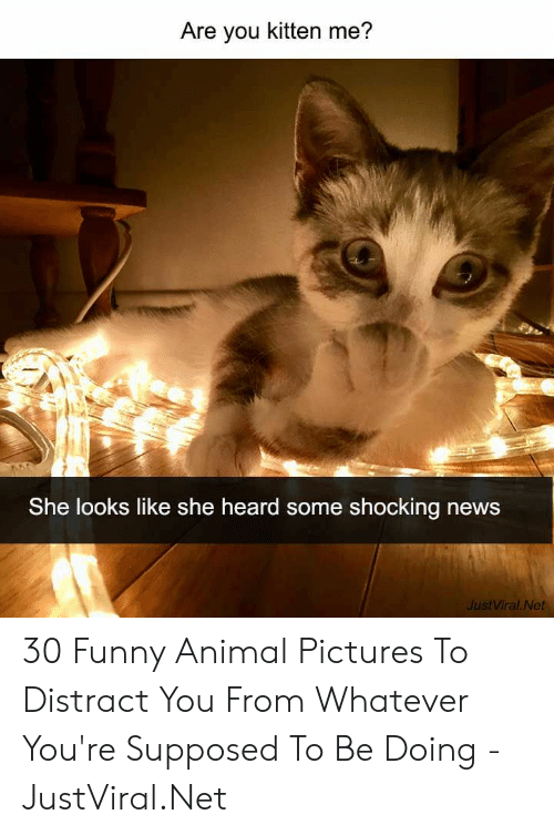 Funny, News, and Animal: Are you kitten me?  She looks like she heard some shocking news  JustViral Net 30 Funny Animal Pictures To Distract You From Whatever You're Supposed To Be Doing - JustViral.Net