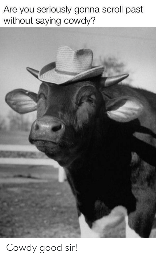 Are You Seriously Gonna Scroll Past Without Saying Cowdy