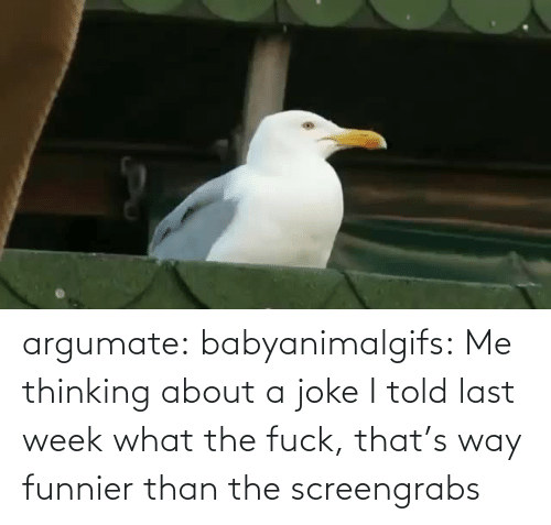 what the fuck: argumate: babyanimalgifs: Me thinking about a joke I told last week what the fuck, that's way funnier than the screengrabs
