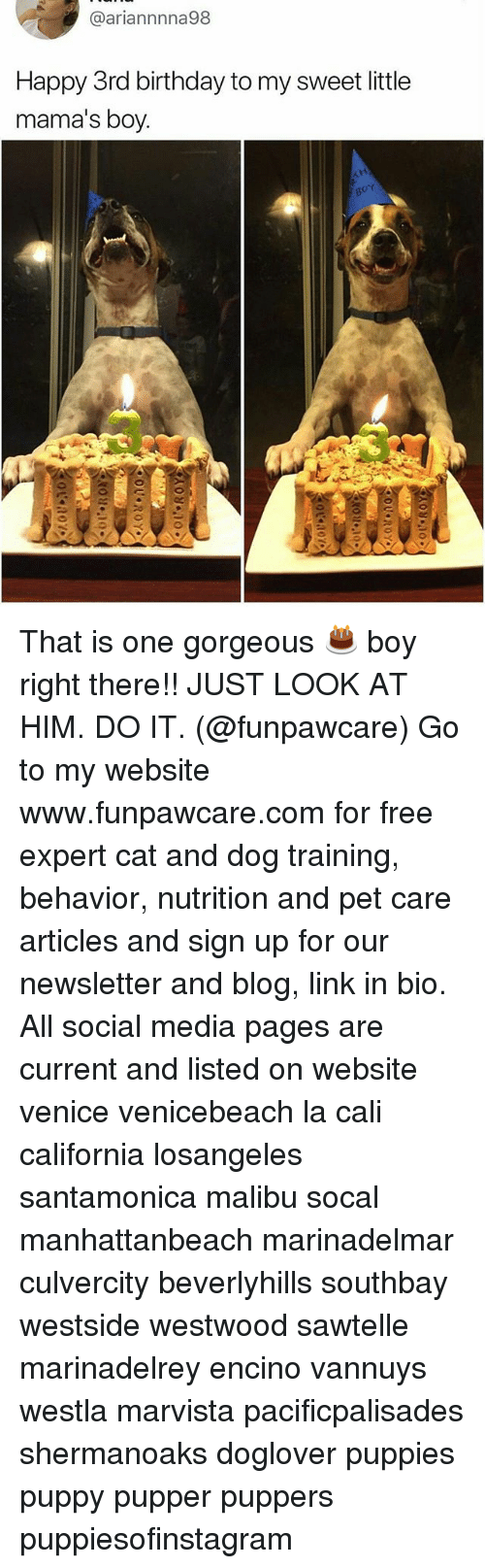 Birthday, Memes, and Puppies: @ariannnna98  Happy 3rd birthday to my sweet little  mama's boy. That is one gorgeous 🎂 boy right there!! JUST LOOK AT HIM. DO IT. (@funpawcare) Go to my website www.funpawcare.com for free expert cat and dog training, behavior, nutrition and pet care articles and sign up for our newsletter and blog, link in bio. All social media pages are current and listed on website venice venicebeach la cali california losangeles santamonica malibu socal manhattanbeach marinadelmar culvercity beverlyhills southbay westside westwood sawtelle marinadelrey encino vannuys westla marvista pacificpalisades shermanoaks doglover puppies puppy pupper puppers puppiesofinstagram