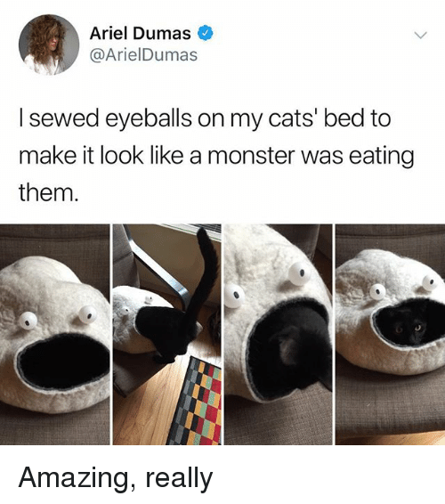Ariel, Cats, and Memes: Ariel Dumas  @ArielDumas  I sewed eyeballs on my cats' bed to  make it look like a monster was eating  them. Amazing, really