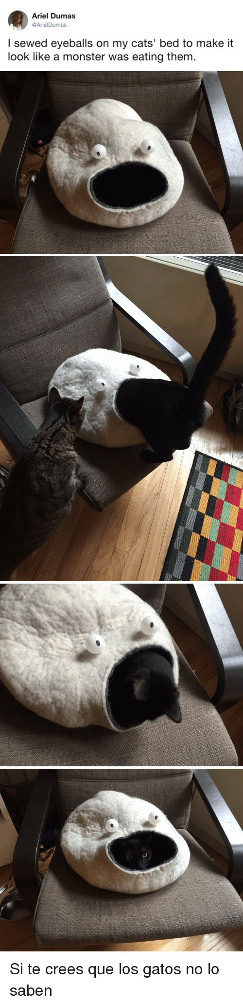 Ariel, Cats, and Monster: Ariel Dumas  @ArielDumas  I sewed eyeballs on my cats' bed to make it  look like a monster was eating them <p>Si te crees que los gatos no lo saben</p>