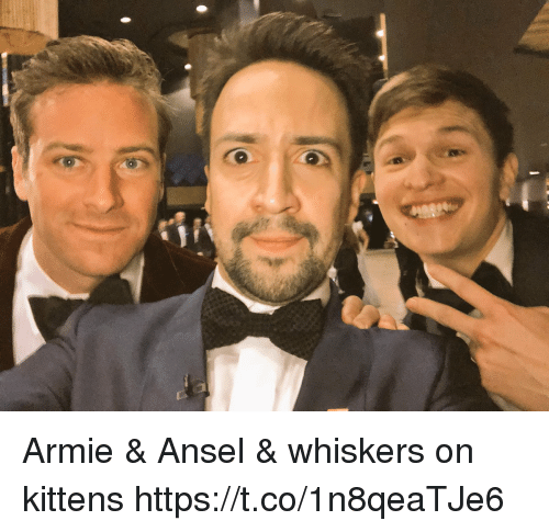 Memes, Kittens, and 🤖: Armie & Ansel & whiskers on kittens https://t.co/1n8qeaTJe6
